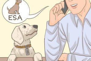 emotional support animal letter