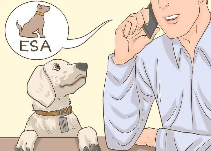 Traveling rules with Your Emotional Support Animal