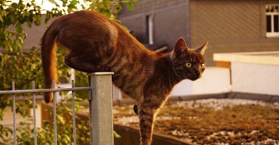 Cat Fencing